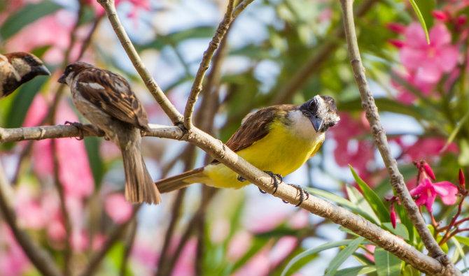 birds-pássaros-em-inglês